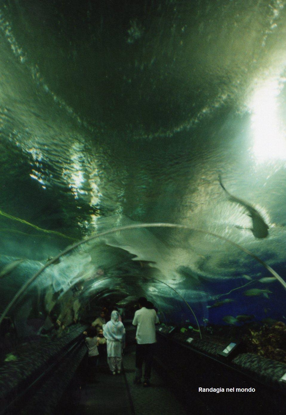 singapore, the aquarium at Sentosa 3