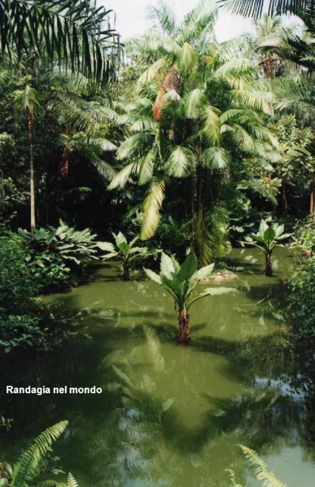 singapore, the botanic gardens 2