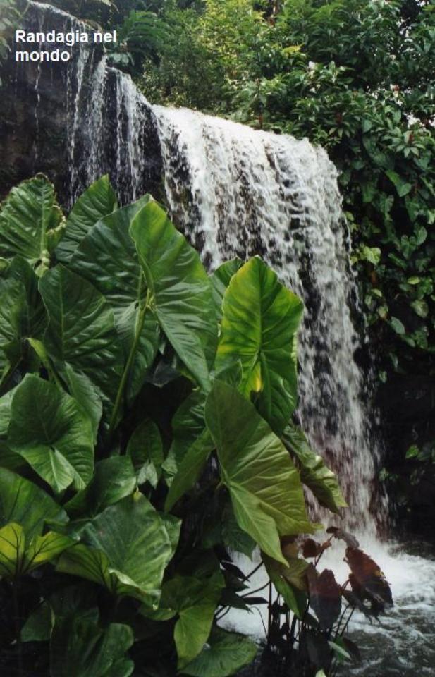 singapore, the botanic gardens