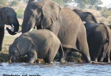 Kasane e Chobe National Park